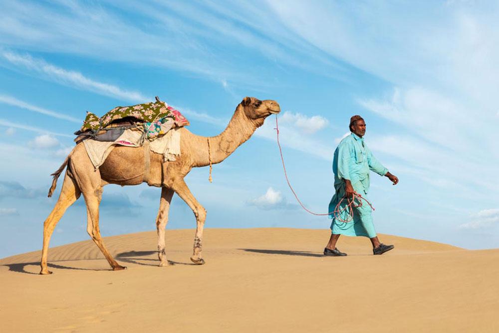 cammello deserto