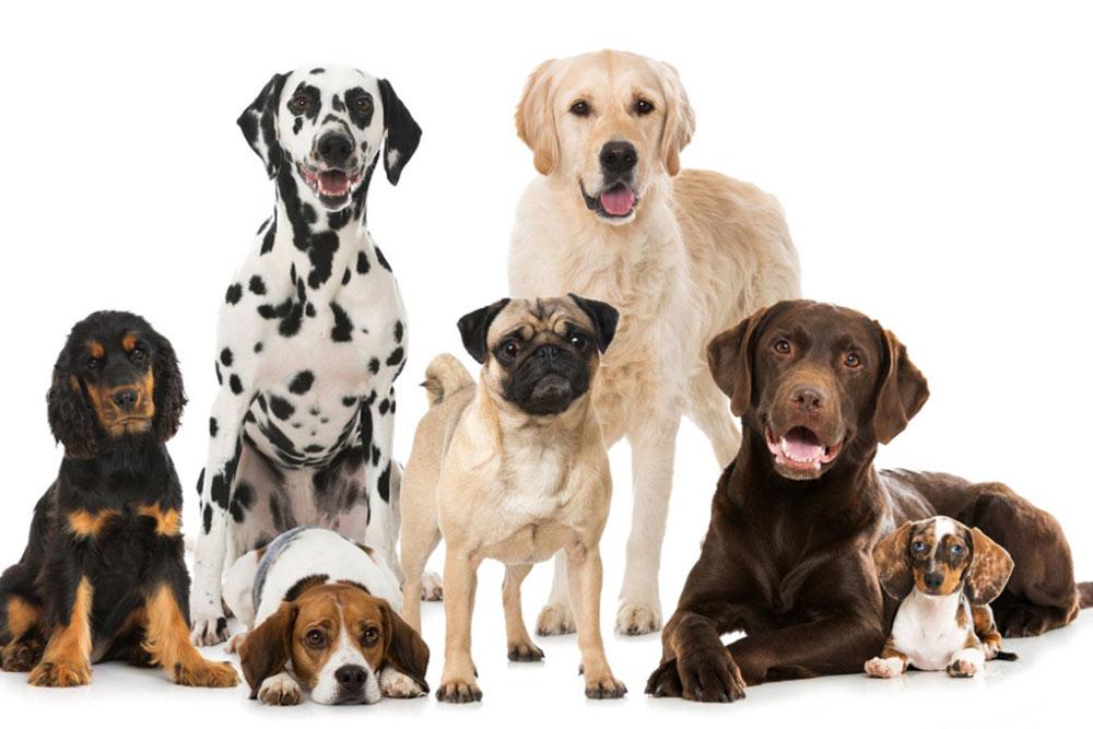 razze di cane